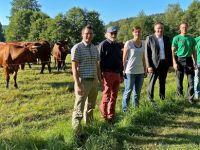 Beweidungsprojekt in den Selbbach-Auen